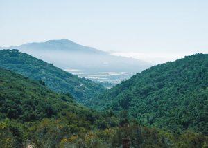Toro-Canyon-Park-Trail