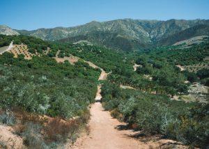 Toro-Canyon-Park-Trail-Santa-Barbara