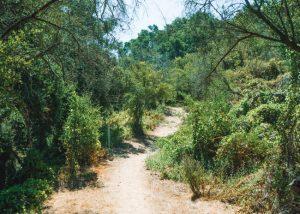 Toro-Canyon-Ridge-Hike