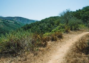 Toro-Canyon-Ridge-Trail-Carpinteria-Summerland
