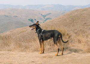 Cass-Hill-Trail-Cayucos-Central-California