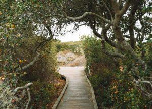El-Moro-Elfin-Forest-California