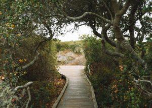 Elfin-Forest-Los-Osos-California-Pygmy-Live-Oak