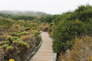 Elfin-Forest-Nature-Preseve-Los-Osos-California