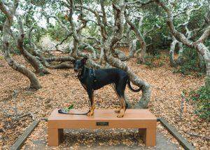 Elfin-Forest-Trail-Central-Coast-California