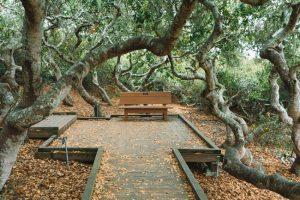 Elfin Forest Trail Los Osos California