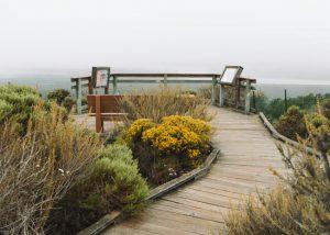 Sienas-view-Elfin-Forest-Los-Osos