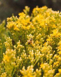 elfin-forest-natural-area-california
