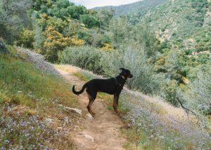 Bakersfield-Hiking-Trails-Mill-Creek-Trail