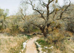 Wind-Wolves-Preserve-California-San-Emidio-Canyon-Trail