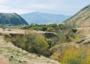 Wind-Wolves-Preserve-Hiking-Trails-Near-Bakersfield