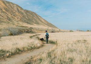 wind-wolves-preserve-bakersfield-california