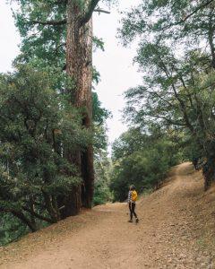Hiking-Tehachapi-Mountain-Trail-California
