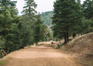 Tehachapi-Mountain-Park-Tehachapi-Mountain-Trail