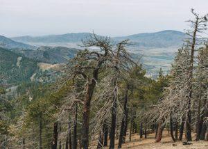 Tehachapi-Mountain-Trail-California-Hiking