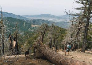 Tehachapi-Mountain-Trail-hiking-in-Tehachapi