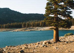 Hikes-Mammoth-Horseshoe-Lake-Trail
