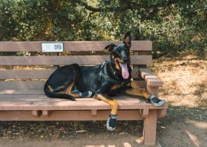 Ventura-Nature-Preserve-Dog-Friendly