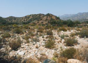 Ventura-River-Preserve