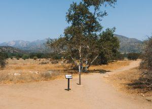 Ventura-River-Preserve-Hike