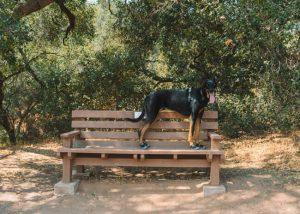 Ventura-River-Preserve-Trail-Dog-Friendly