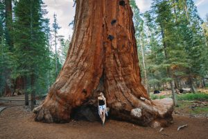 Best Hikes Sequoia National Forest