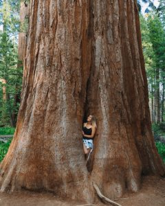 Hikes-In-Sequoia-National-Forest-Trail-Of-100-Giants