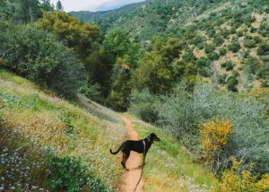 Hikes-Sequoia-National-Forest-Mill-Creek-Hike
