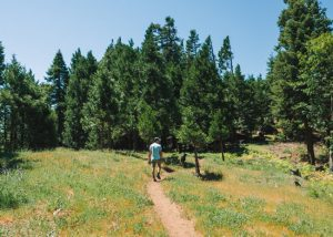Hikes-Sequoia-National-Forest-Unal-Trail