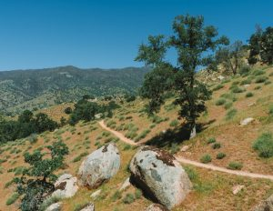 Mill-Creek-Trail-Hikes-Sequoia-National-Forest
