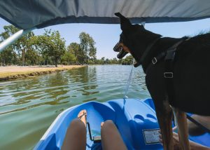 Things-to-do-in-Bakersfield-Hart-Park-Boat-Rental