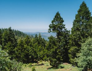 Unal-Trail-Hikes-Sequoia-National-Forest